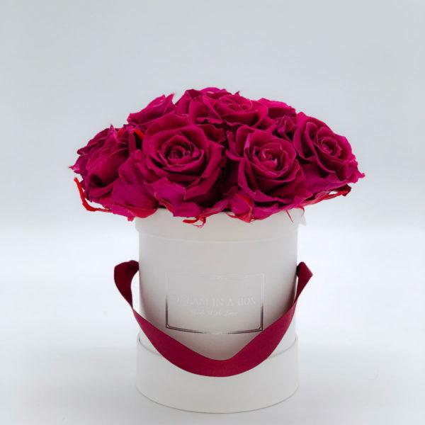 pretty dream rose stabilizzate color prugna